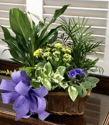 Medium Dish Garden in Natural Bark Basket from Martha Mae's Floral & Gifts in McDonough, GA
