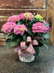 Happy Hydrangeas from Martha Mae's Floral & Gifts in McDonough, GA